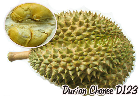 durian-123