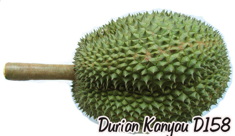 durian-158