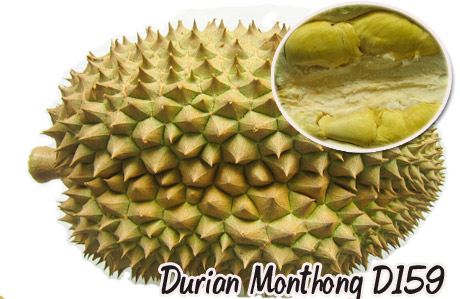 durian-159