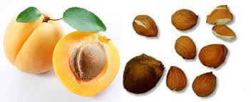Apricot_Seeds