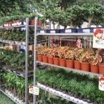 Jualan anak benih di Laman 2008