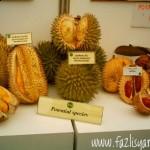 Durian Sabah, Durian Isu, Durian Pakan, Durian Merah...