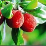 Pendapat mengenai Penggunaan Tumbuhan Herba