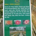 Pokok Gerbera Berbunga Sepanjang Tahun