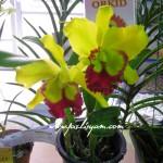 Pameran Orkid di HPPNK 09