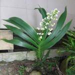 Unidentified Plant : Pokok Apa ni?