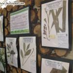 Pengenalan kepada Herbarium