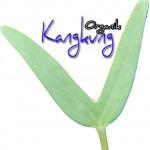 Tanam Kangkung Organik