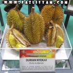 Durian Nyekak