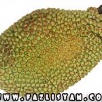 Cempedak Durian