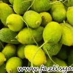 Sayur Kakrol dan Parval dari Bangladesh
