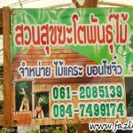Pameran Bonsai @ Agricultural Fair Thailand 2018