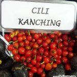 Cili Kanching