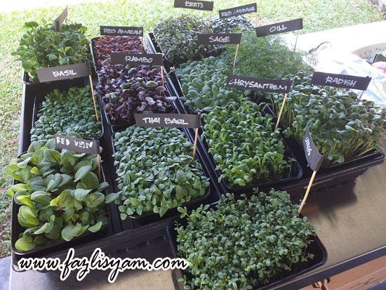 Sayur Microgreen